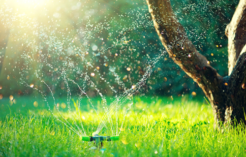 Watering without Irrigation